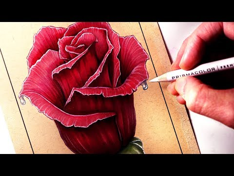 How to Draw a Rose - Coloured Drawing