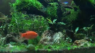 bể cá thủy sinh đẹp nhất thế giới