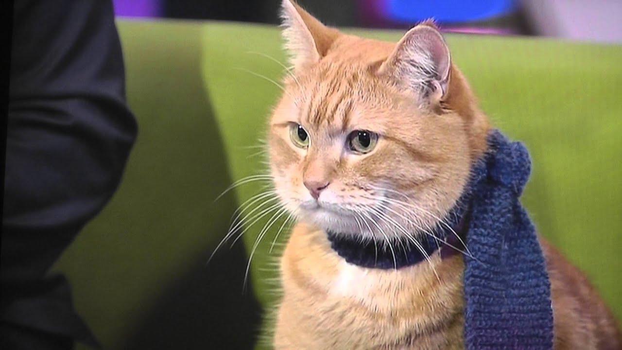 A Cat Named Bob Duration