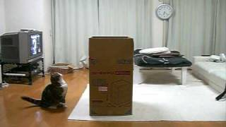Thumb Maru el gato obsesionado ahora con cajas grandes