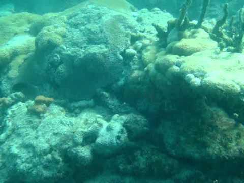 Reef - Wandering