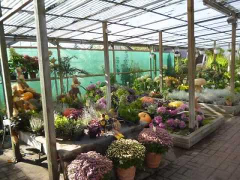 Gärtnerei  Thöming & Blumen Julia