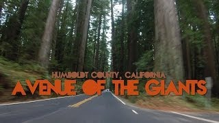 Avenue of the Giants - Humboldt County California