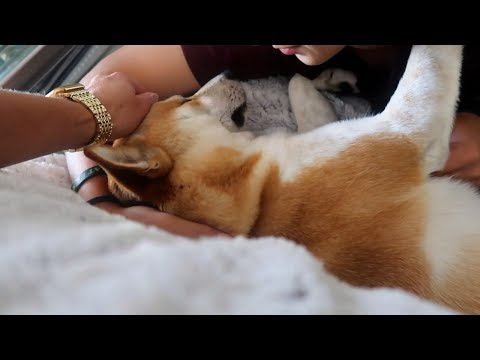 OUR DOG DOESN'T FEEL WELL..    VLOG # 238