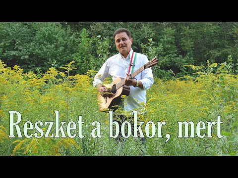 Petőfi Sándor - Reszket a bokor, mert...Enyedi Sándor - Megzenésített vers Official Video
