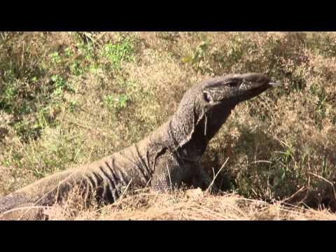 Yala Safari - Safari Yala Sri Lanka - Park Nacional Yala Safari Sri Lanka