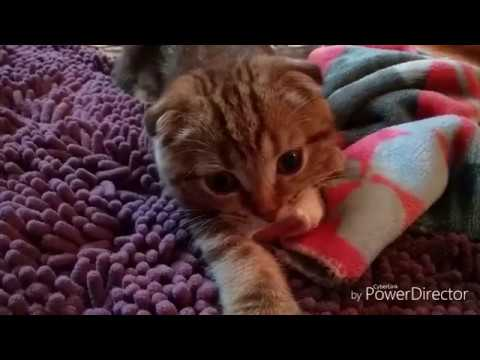 Вопрос?Почему наш котёнок так делает?/Ждём ответа))Мурзик /Запрос 😘😘😘