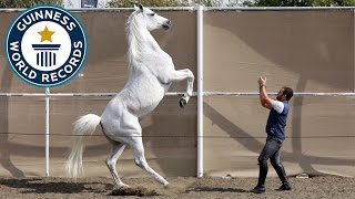 Fastest 10 M on Hind Legs by a Horse – Guinness World Records