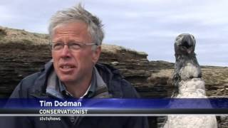 Scottish TV's item on the 200th anniversary of the Great Auk's extinction
