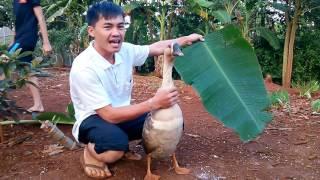Game with goose (Trò chơi với con ngỗng)
