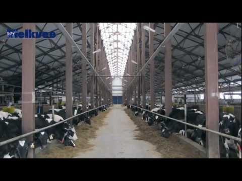 Gigantische melkbedrijven in Rusland