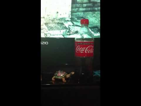 Big Cock The Coke video