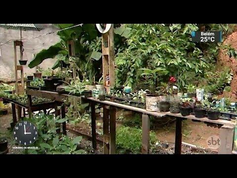 Horta comunitária ajuda a resgatar o contato com a natureza no ES | SBT Notícias (21/11/17)