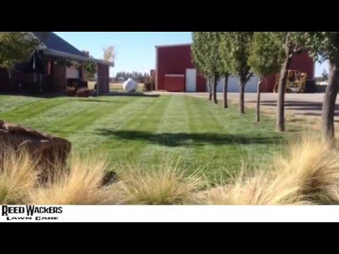 Best Lawn Care Maintenance Services in Amarillo, TX (806) 316-4223