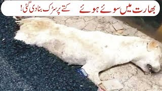 Indian Construction workers go blind on sleeping dog crush it, build road over its dead body