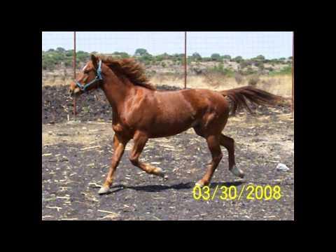 caballos de verdad pepe el toro queretaro utah