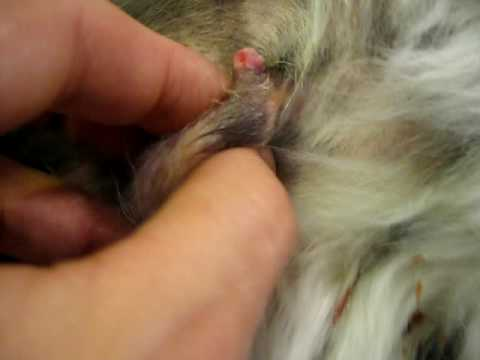 Treatment dog cancer homeopathic