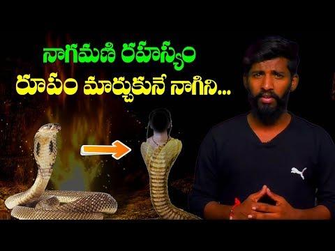 mystery of snakes in telugu I Snake Stone Or Diamond In Cobras I Dangerous Snakes In The World