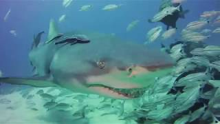 Florida Compilation: Our World Underwater 2019