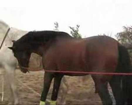 yeguada susaeta, caballos,yeguas, cubricion, videos caballos