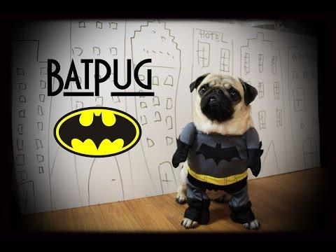 BatPug VS Bad Monkey