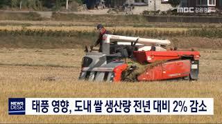 도내 쌀 생산량 전년 대비 2% 감소