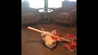 犬のお腹に沢山のカップを乗せて静止するバランス犬♪