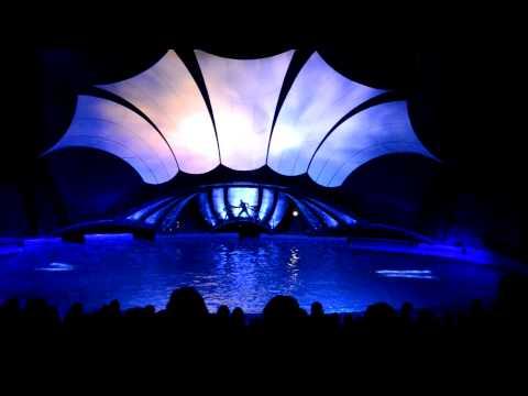"""""""Dolphin Show"""" Georgia Aquarium"""