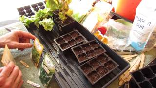 For New Gardeners: How to Seed Start Lettuce, Arugula, Corn Salad Indoors: Greens! - MFG 2014