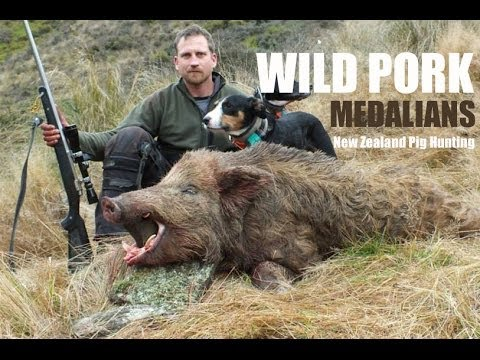 Wild Pork Medalians, Boar Hunting With Dogs In New Zealand video
