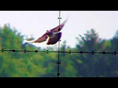 Pigeon Shooting 130 Yards (118m) Edgun Matador PCP Air Rifle
