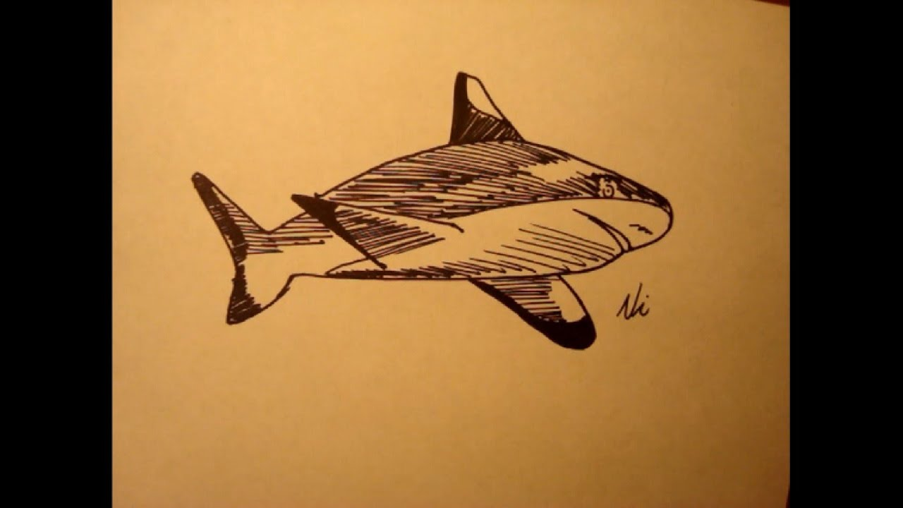 How to draw a hammerhead shark  Step by step Drawing