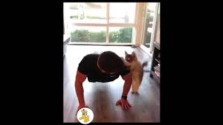 New Funny Videos pranks 2018 - Try Not To Laugh - Funny videos - Funny Fails of 2018 #252