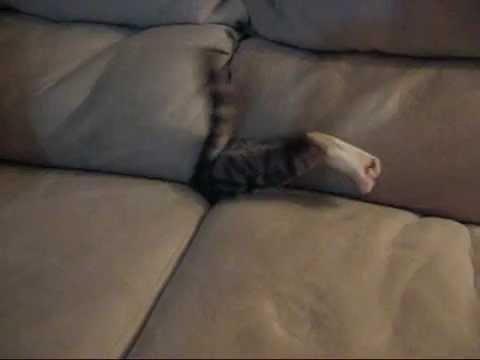Gatos - Gato se esconde en sofá y desaparece