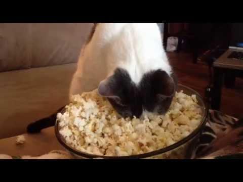 Cat Eating Corn Gif