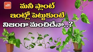 Unknown Facts About Money Plant | Money Plant Vastu Tips in Telugu