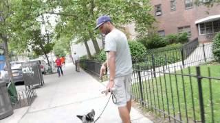 Blue Heeler with Severe Dog Aggression - Dog Rehabilitiation - DCTK9