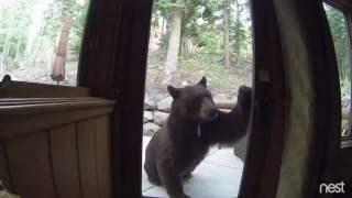 Electric Fence Shocks Bear in Lake Tahoe, CA