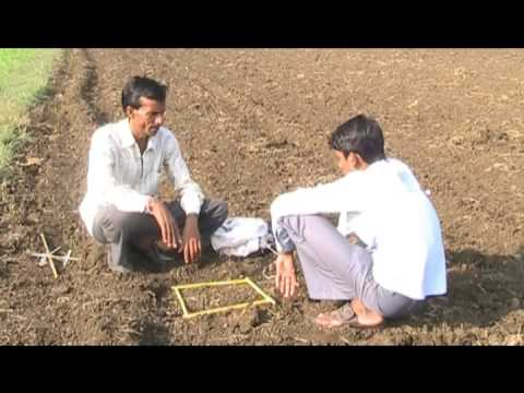 wheat cultivation withe shree method hindi access madhyapradhesh