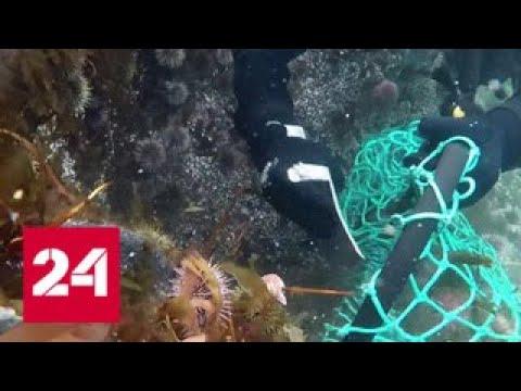 На Дальнем Востоке хотят ограничить добычу морских ежей - Россия 24