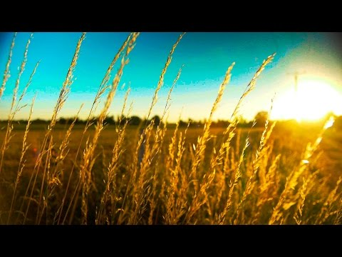 Slow, Peaceful And Calming Piano Music -  Work, Study, Love Songs - Relaxdaily N°057 video