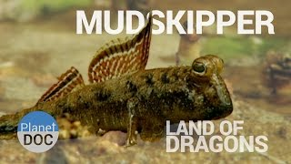 Mudskipper. Land of Dragons | Nature - Planet Doc Full Documentaries