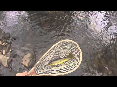 Catching wild Brown Trout in Winter, New Jersey Fishing