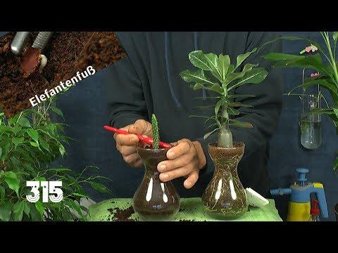 Im Reich der Zimmerpflanzen Anzucht und Vermehrung allerlei