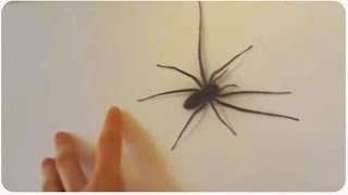 Spider Decides He's Had Enough Of Humans