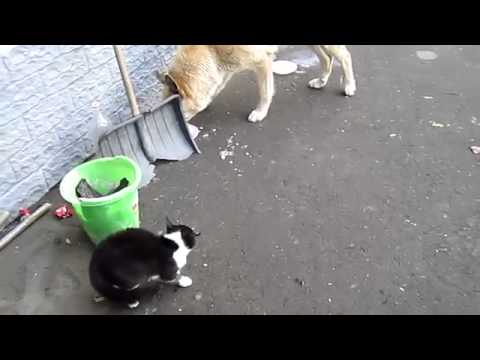 Юмор среди животных! Животные приколы! Group YouTube Channel