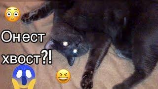 Прикол с котом/Смешной кот Кекс