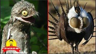 10 unique and unique birds in the planet