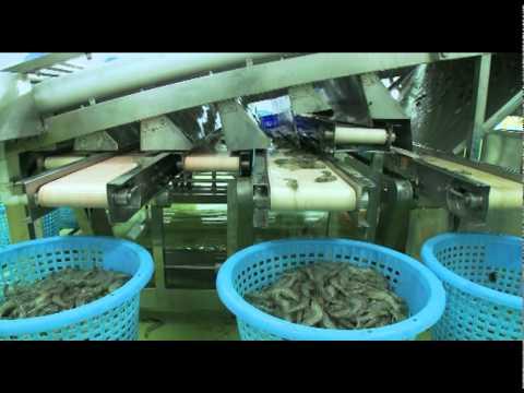 Blue Archipelago Berhad Marketing Video