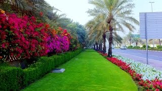 Winter in Dubai, UAE